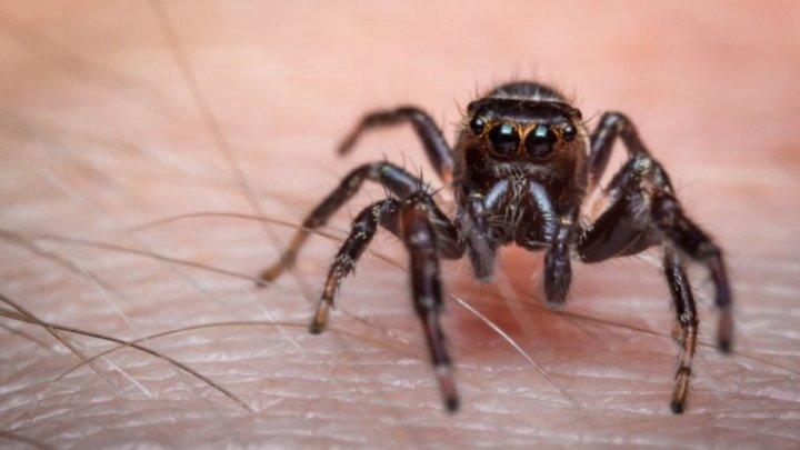 Cum tratezi rapid mușcătura de păianjen? Cum o identifici și ce trebuie să faci într-o astfel de situație