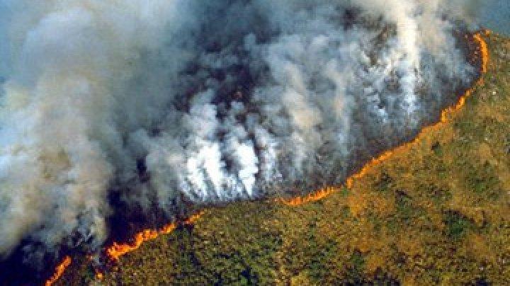 Tragedia incendiului din Pădurea Amazoniană. De ce afectează acest incident întreaga planetă