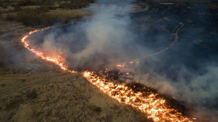 Brazilia va accepta ajutoarele internaţionale pentru stingerea incendiilor din Pădurea Amazoniană