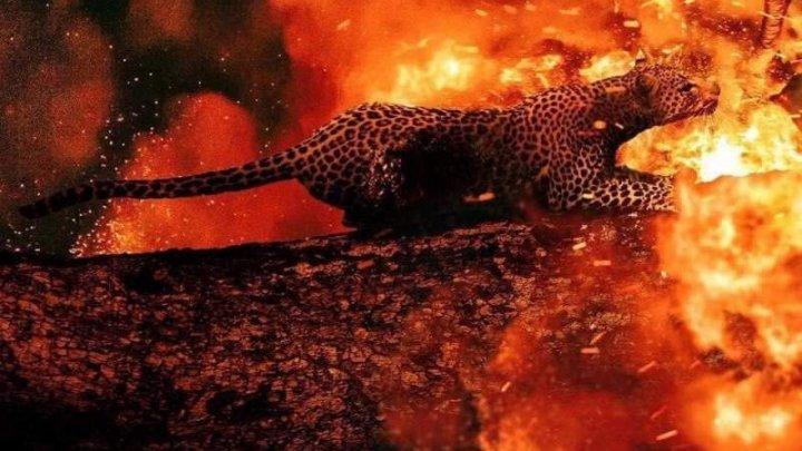 Iadul nu se mai termină. Animalele ard de vii în incendiile din Amazon (VIDEO)