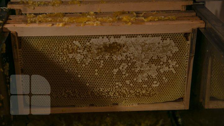 UN AN APICOL REUŞIT. Culesul mierii de floarea soarelui este pe sfârşite (FOTOREPORT)