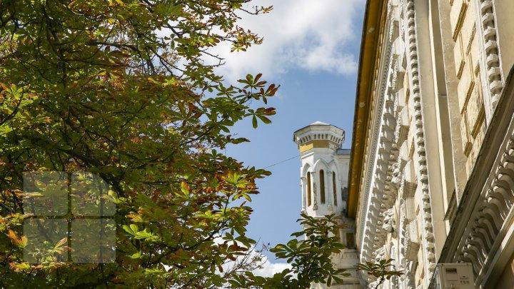 Frunzele castanilor din Capitală au devenit ruginii înainte să vină toamna. Care este cauza