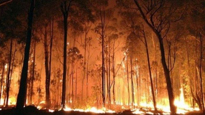 Mai mulţi copii, arestaţi pentru implicarea în incendiile ce devastează estul Australiei