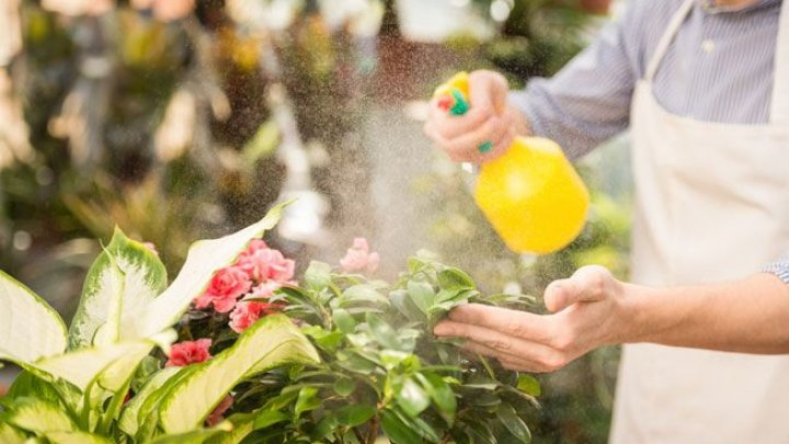 Ce se întâmplă dacă stropești plantele cu apă în care au fiert cartofi