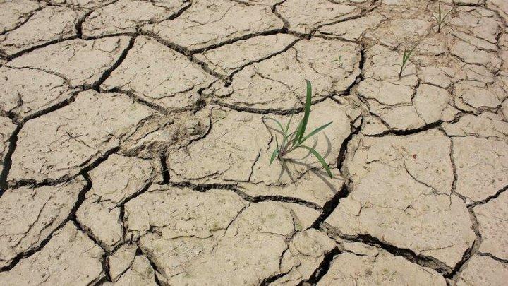 Peste 500.000 de persoane din Angola se confruntă cu insecuritatea alimentară din cauza unei secete severe
