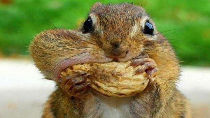 Descoperire inedită. Unde şi-au depozitat nişte veveriţe proviziile pentru iarnă (FOTO)
