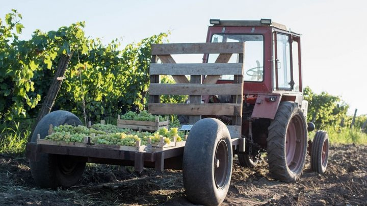 Să curgă vinul, să evităm accidentele. INP vine cu recomandări pentru fermierii, angajaţi în trafic