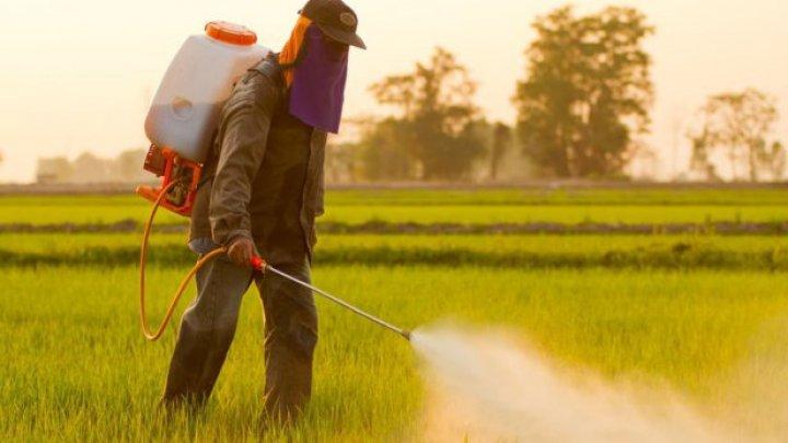 Germania va interzice folosirea erbicidului glifosat care ar cauza cancer