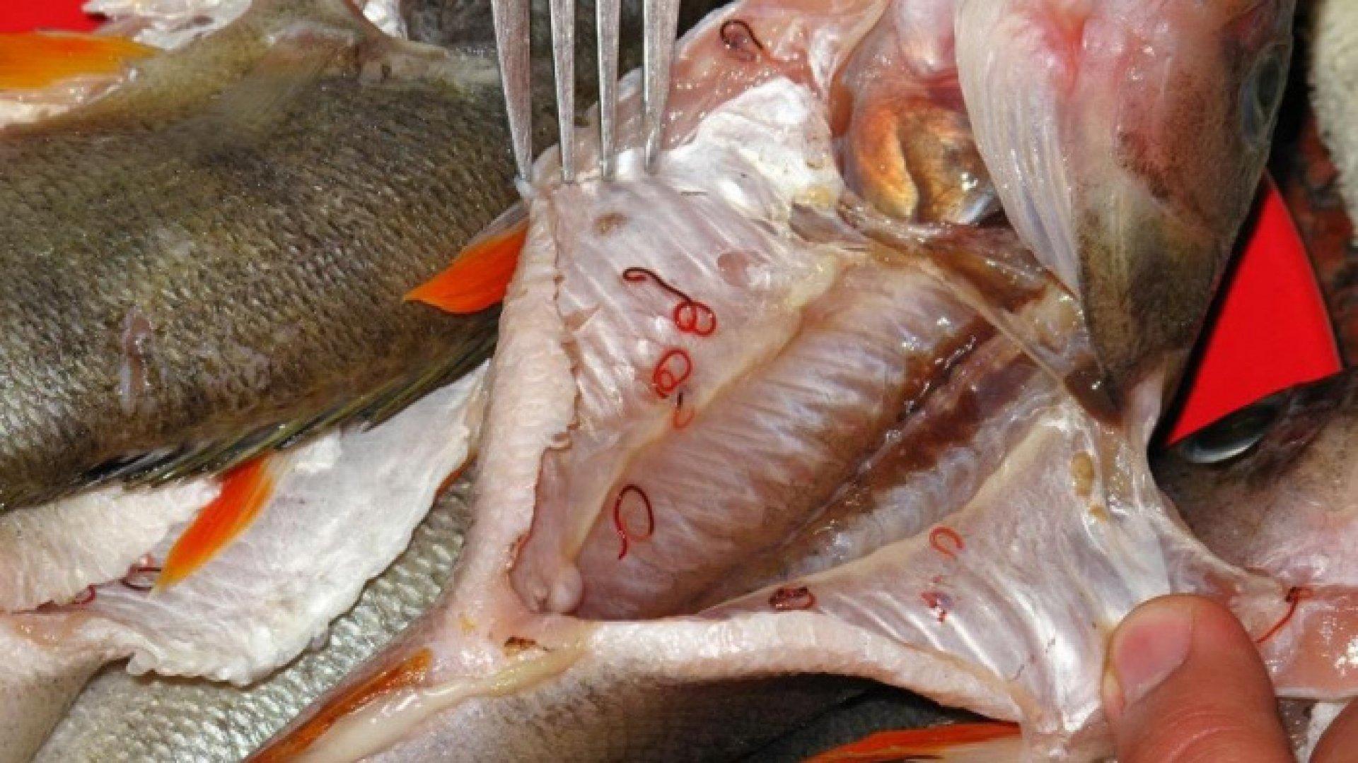 9 Lucruri despre paraziţii peștilor