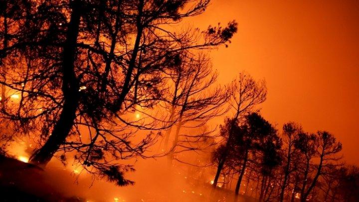 Incendii de vegetaţie în Australia: Zeci de locuinţe distruse, oameni evacuaţi
