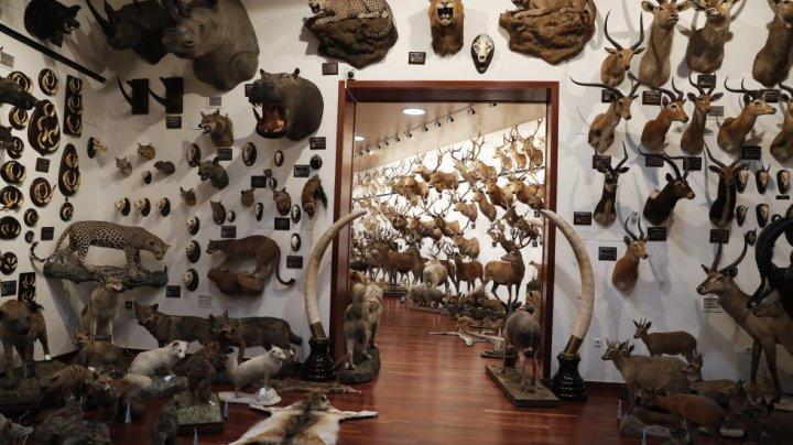 Arca lui Noe împăiată în casa unui spaniol. Un milionar a vânat 420 de specii de animale