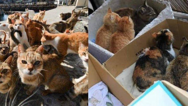 Gest impresionant! Autoritățile japoneze au relocat pisicile de pe insula Okishima, înainte de taifun
