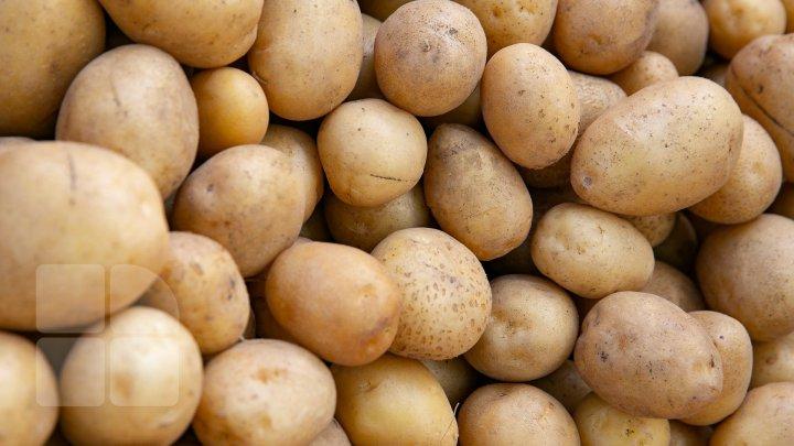 ÎNGRIJORĂTOR: 95 la sută din loturile de cartofi care vin în Moldova sunt infestate cu o bacterie. 24 de loturi, returnate