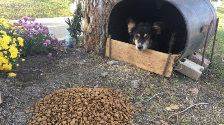 EMOŢIONANT! Un câine nu mai pleacă din locul în care a murit un tânăr de 21 de ani
