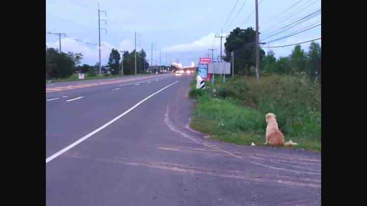Povestea emoţionantă al unui câine pierdut, care şi-a așteptat stăpânii în același loc, timp de patru ani (FOTO)