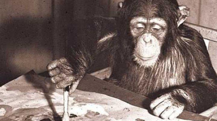 Zeci de tablouri pictate de un cimpanezeu faimos, scoase la vânzare cu 250.000 de dolari