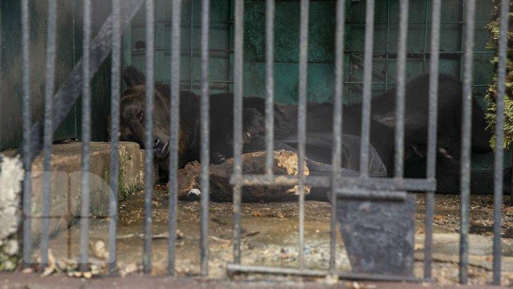 Animalele de la Grădina Zoologică din Capitală, gata de iarnă. Cele mai tolerante specii la frig (FOTOREPORT)