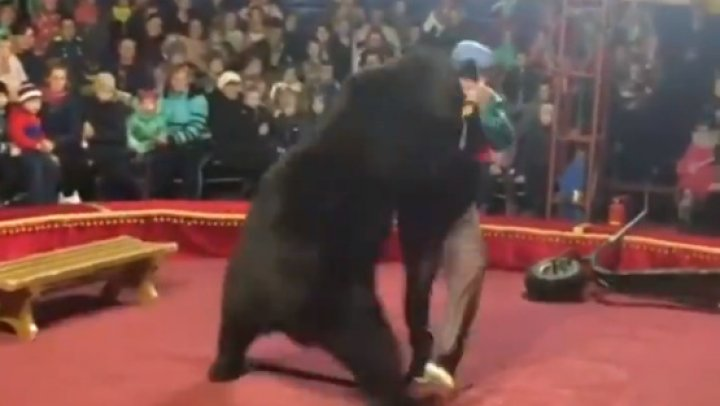 Clipe de groază la circ. Un urs și-a atacat dresorul în timpul unui spectacol (VIDEO)
