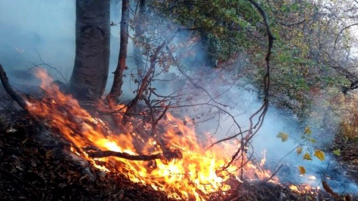 Arde o pădure din Sibiu. Zeci de pompieri şi voluntari intervin pentru stingerea incendiului