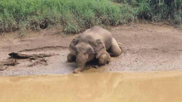 Un elefant dintr-o specie pe cale de dispariție a fost ucis, cu 70 de gloanțe în corp
