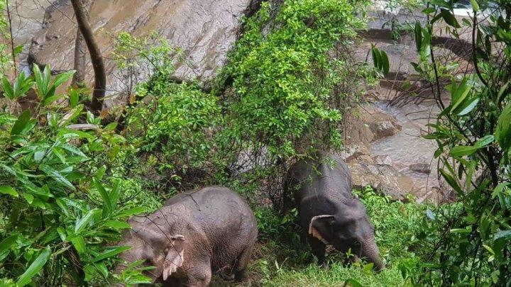 Lecţie impresionantă. Şase elefanţi au murit în timp ce încercau să se salveze unii pe alţii (VIDEO)