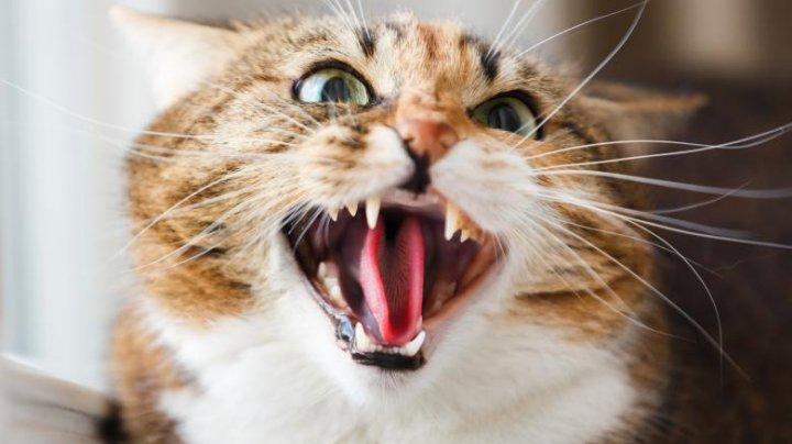 Un bărbat riscă cinci ani de închisoare pentru că și-a folosit pisica pe post de armă, pentru a ataca un polițist