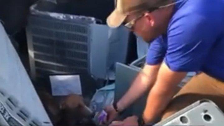 Un câine a fost găsit sub dărâmăturile unei case din Bahamas la o lună după trecerea uraganului Dorian