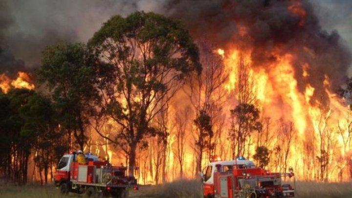 Incendii de vegetaţie în Australia: Patru morţi, potrivit ultimului bilanţ