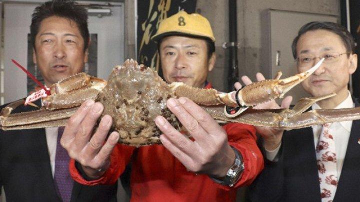 Un crab de zăpadă a fost vândut la licitaţie cu un PREŢ EXORBITANT