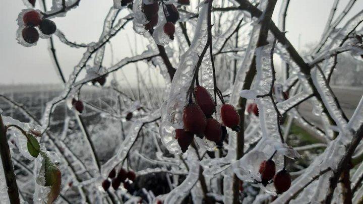 PEISAJ DE IARNĂ la Soroca. Copaci îngheţaţi şi zăpadă (FOTO)