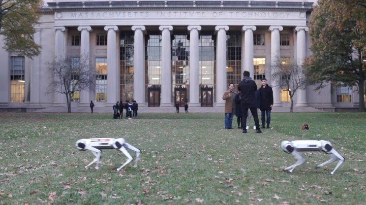 Au fost inventați robo câini care funcționează prin intermediul unei telecomenzi