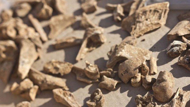 În nordul Israelului au fost descoperiți dinţi vechi de 40.000 de ani