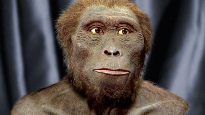 Cine a fost strămoşul omului, conform noilor cercetări. Era cât un cimpanzeu