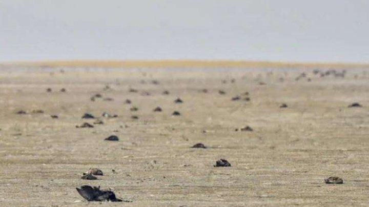 India: Aproape 18.000 de păsări migratoare au fost găsite moarte