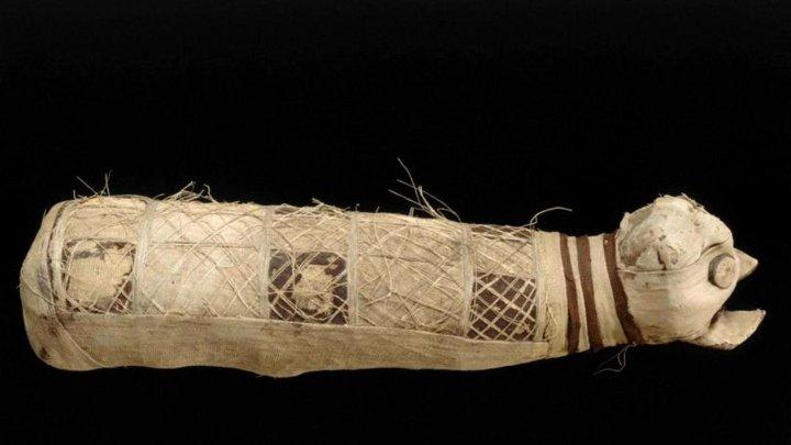 Oamenii de știință au rămas şocaţi! Ce au descoperit după ce au analizat rămășițele unei pisici mumificate în Egiptul Antic
