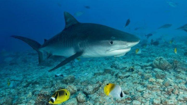 Descoperire macabră. Mâna unui turist dispărut a fost găsită în burta unui rechin