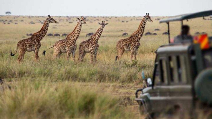 Incident dramatic într-un safari! Cel puțin zece animale sălbatice au ars de vii