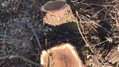 La Făleşti se taie copacii! Vezi ce amenzi au împărţit inspectorii de mediu
