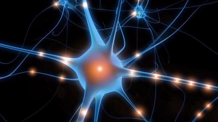 Revoluţionar! Au fost creați neuronii artificiali care pot repara circuitele nervoase din creier