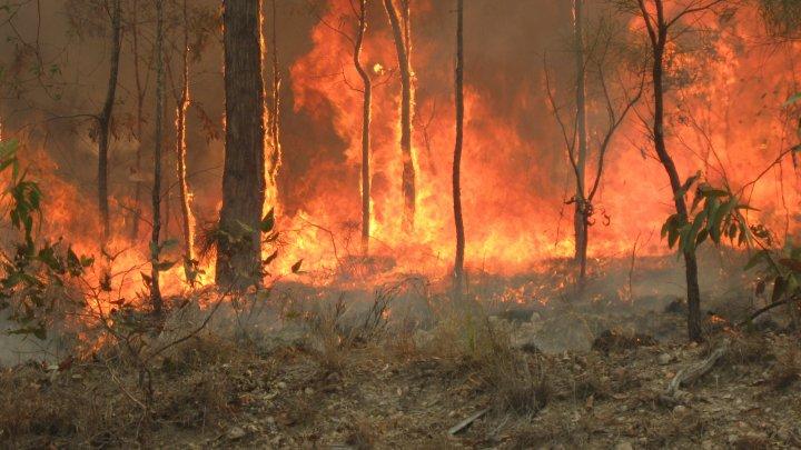 Meteorologii australieni au anunţat când vor cădea ploi suficient de abundente ca să domolească incendiile de vegetaţie