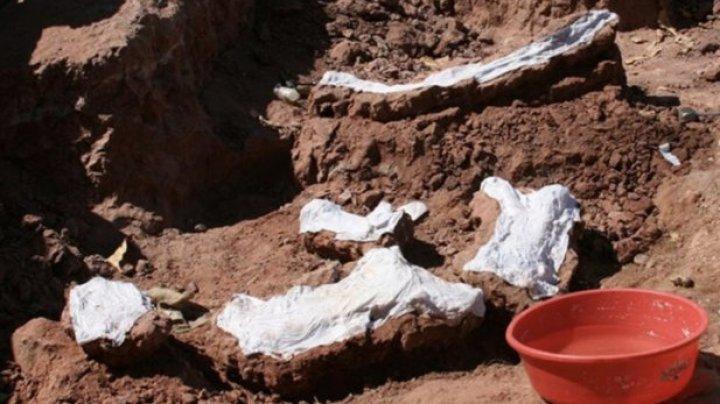 O nouă specie de dinozauri, Yamanasaurus lojaensis, a fost descoperită în Ecuador
