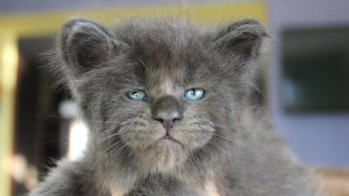 Pisicuțe cu fețe umane, SENZAŢIE pe Internet (IMAGINI ULUITOARE)