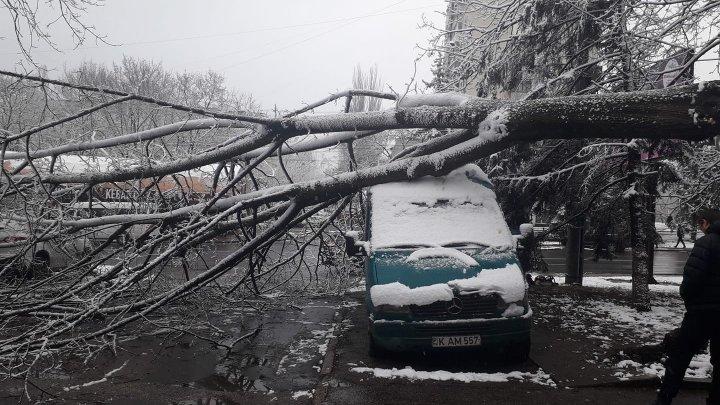 Un copac a căzut peste o maşină pe strada Traian din Capitală (FOTO)