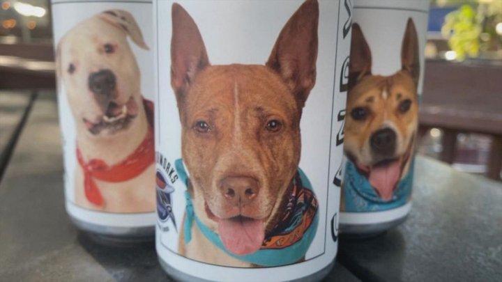 O fabrică din Florida a lansat cutii de bere cu fotografiile câinilor ce pot fi adoptaţi