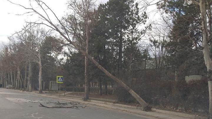 Vântul face ravagii în Capitală. Un copac, doborât de rafalele puternice peste firele de troleibuz