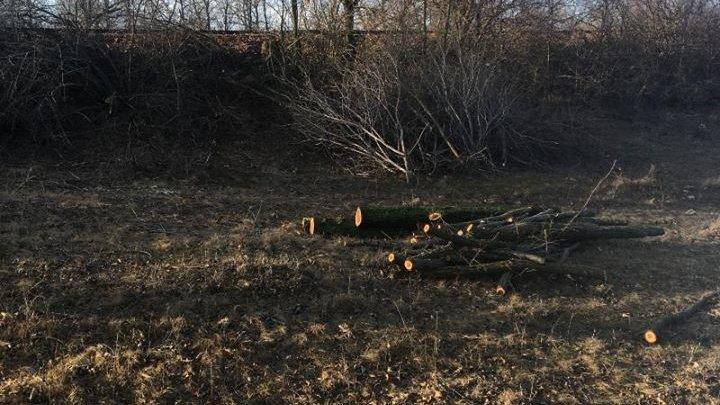 La Abaclia se taie copacii. Un bărbat, amendat de oamenii legii (FOTO)