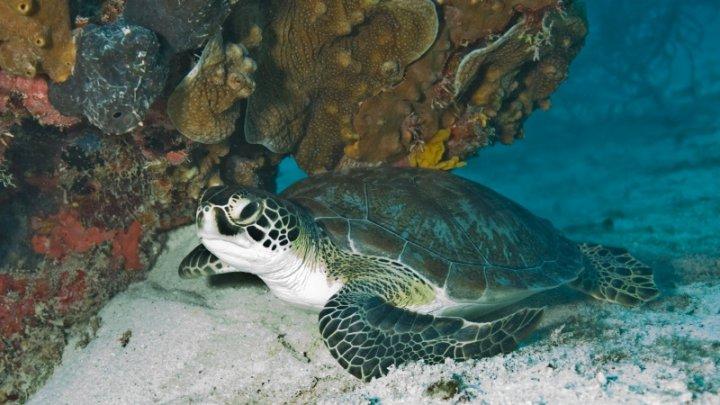 Mexic: Circa 292 de ţestoase, descoperite moarte pe plajele statului Oaxaca