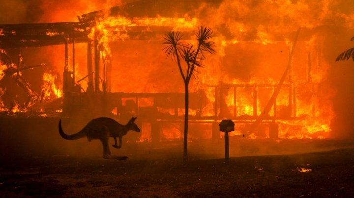 Peste jumătate din habitatul speciilor ameninţate cu dispariţia, distrus de incendiile de vegetaţie din Australia