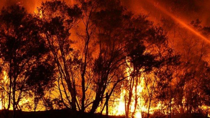 Incendii de vegetaţie la periferia oraşului Atena:  Mai multe localităţi au fost evacuate