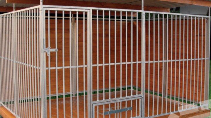 În Chişinău vor fi instalate cuşti pentru animale fără adăpost (DOC)